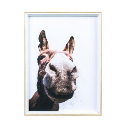 Quirky Donkey Print