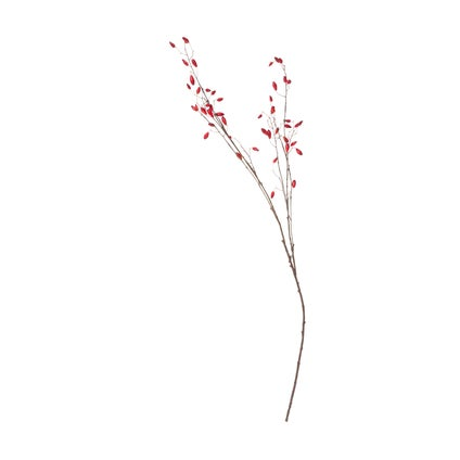 Rosehip Branch