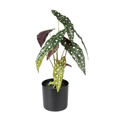 Spotted Begonia Faux Plant - Green